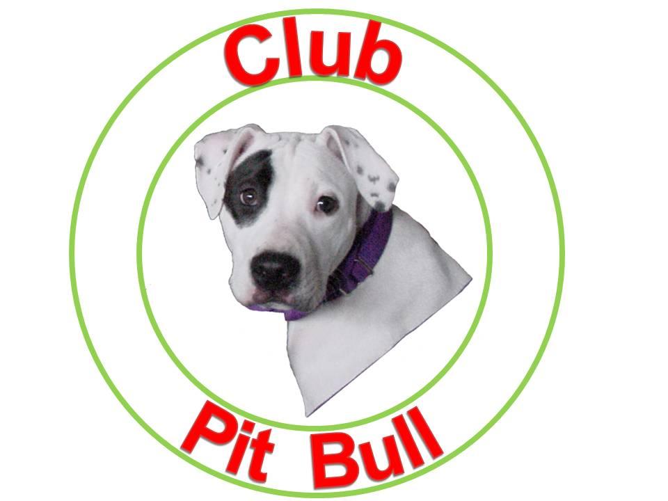 Club Pit Bull